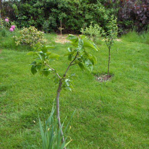 Bäume gepflanzt